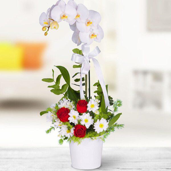 Kırıkkale Beyaz Orkide Aranjman
