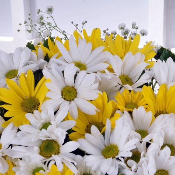 Kış Güneşi Kır Çiçekleri